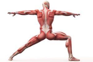 筋肉イメージのイラスト