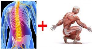 骨格と筋肉イメージ